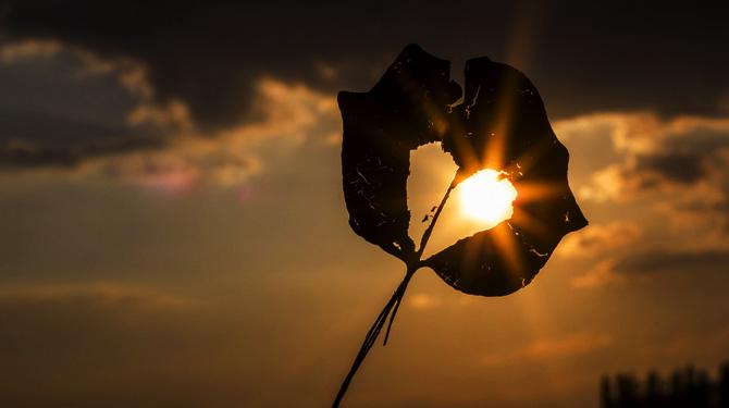 Blatt mit Loch in Form eines Herzens, durch das das Sonnenlicht bricht